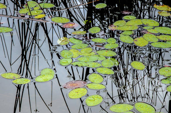 Photograph - Natural Reflections by Roxy Hurtubise