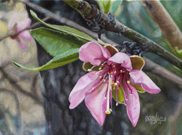 Persica Wall Art - Painting - Peach Blossom by Joshua Martin