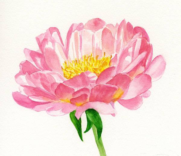 Peach Colored Peony Blossom Art Print