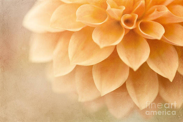 Photograph - Peach Delight by Beve Brown-Clark Photography