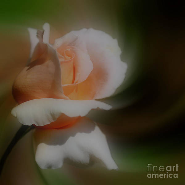 Photograph - Peach Rosebud by Smilin Eyes  Treasures