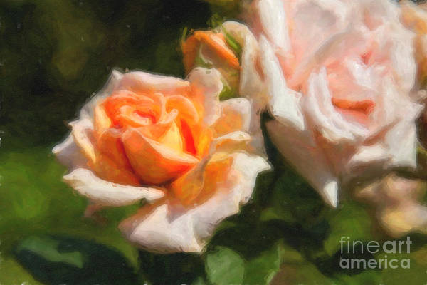 Digital Art - Peach Roses  by Jill Lang