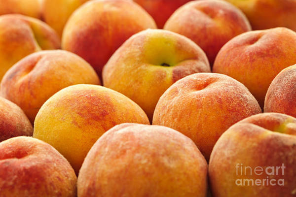 Peachy Wall Art - Photograph - Peaches by Elena Elisseeva