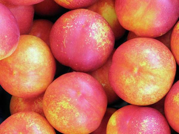 Persica Wall Art - Photograph - Peaches by Tim Vernon / Science Photo Library