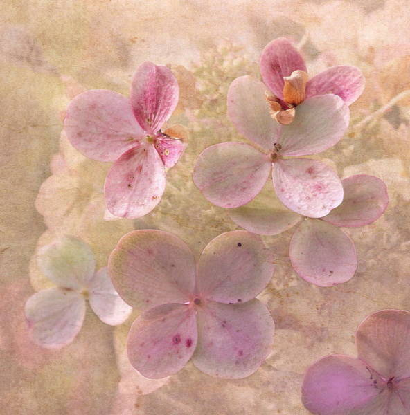 Peachy Wall Art - Photograph - Peachy Pink Floral by Angie Vogel