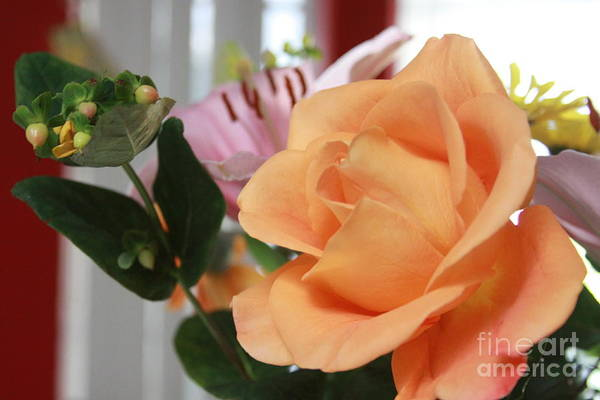 Photograph - Peachy Rose by Robin Maria Pedrero