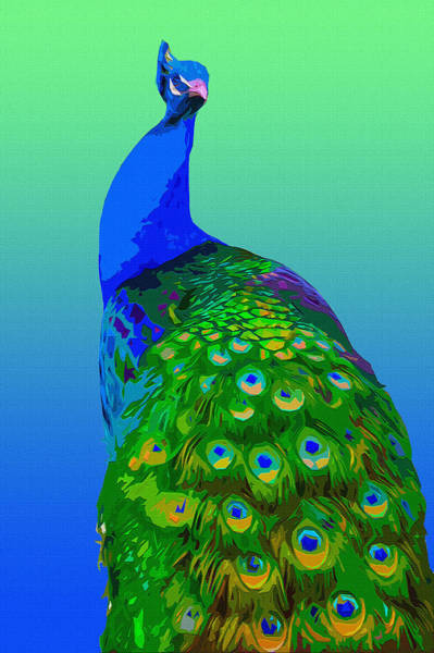 Pheasant Digital Art - Peacock 2 by Brian Stevens