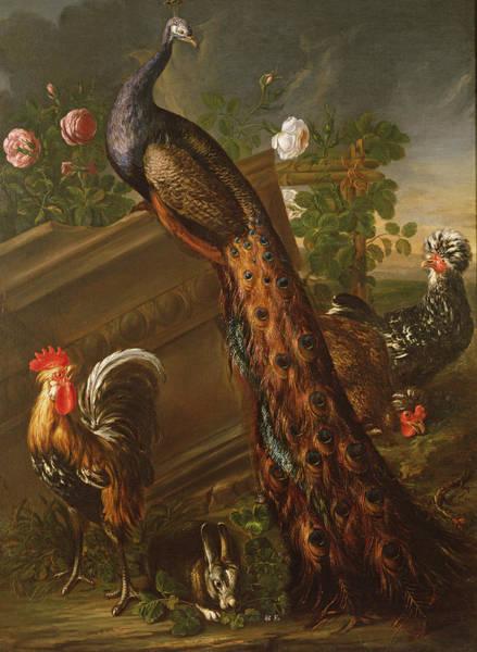 Wall Art - Photograph - Peacock And Cockerels, 17th Century by David de Koninck