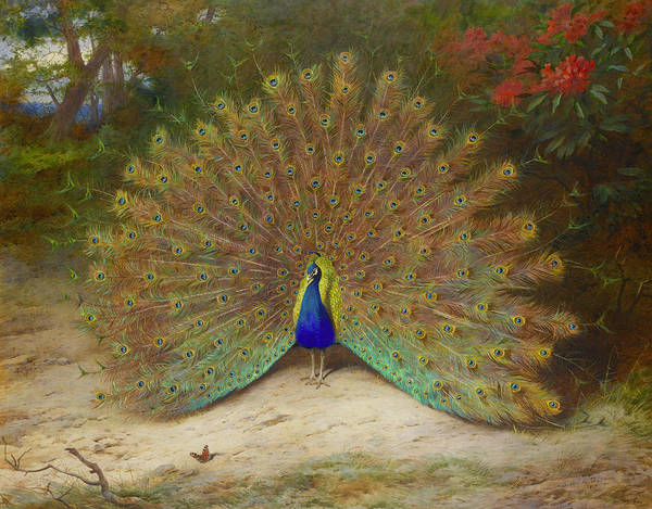 Wall Art - Painting - Peacock And Peacock Butterfly by Archibald Thorburn