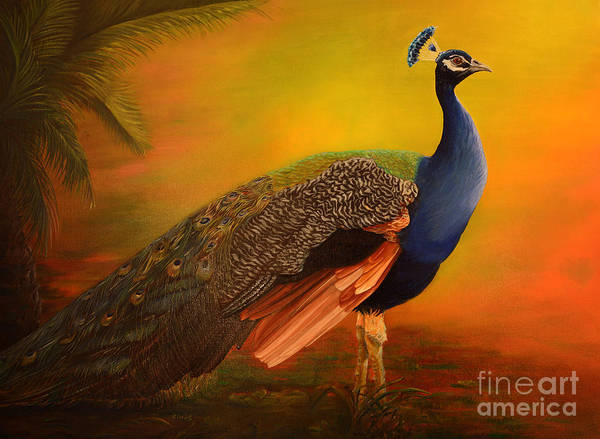 Peafowl Painting - Peacock At Sunrise by Zina Stromberg