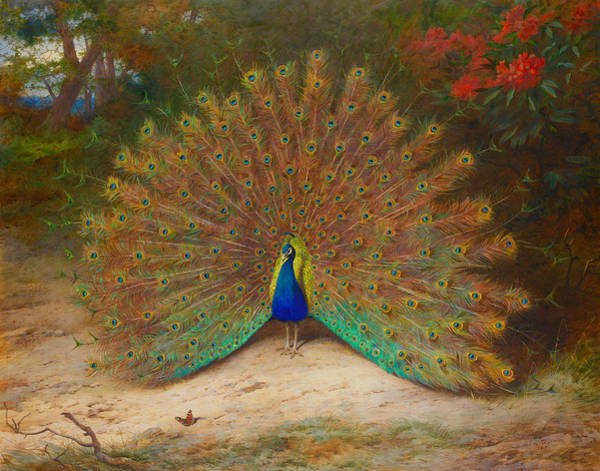 Wall Art - Painting - Peacock Butterfly by Archibald Thorburn