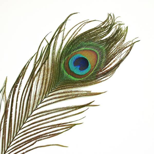 Wall Art - Photograph - Peacock Feather by Mark Sykes