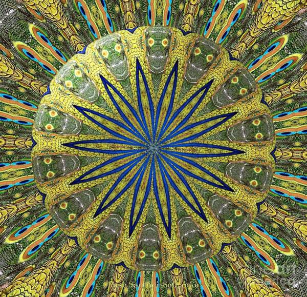 Photograph - Peacock Feathers Kaleidoscope Under Glass  1 by Rose Santuci-Sofranko