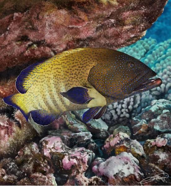 Peacock Grouper Art Print by Owen Bell