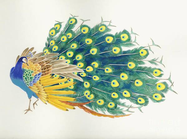 Japanese Art Digital Art - Peacock by MGL Meiklejohn Graphics Licensing