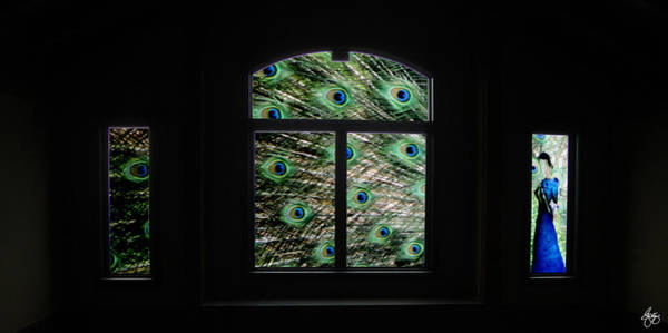 Photograph - Peacock In A Window by Wayne King
