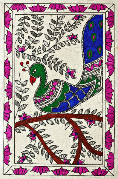 Peacock In Bloom Art Print by Neha Dasgupta