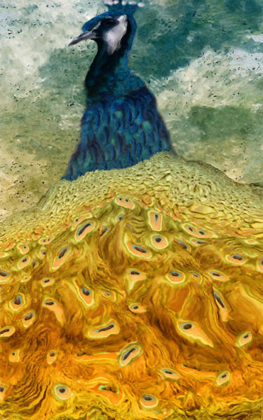 Peafowl Painting - Peacock by Jack Zulli