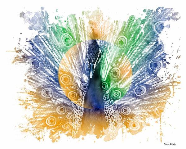 Wall Art - Digital Art - Peacock Splash by Diana Shively