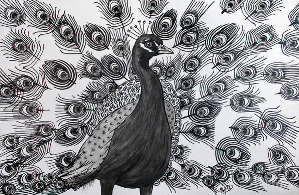 Drawing - Peacock Walk by Megan Dirsa-DuBois