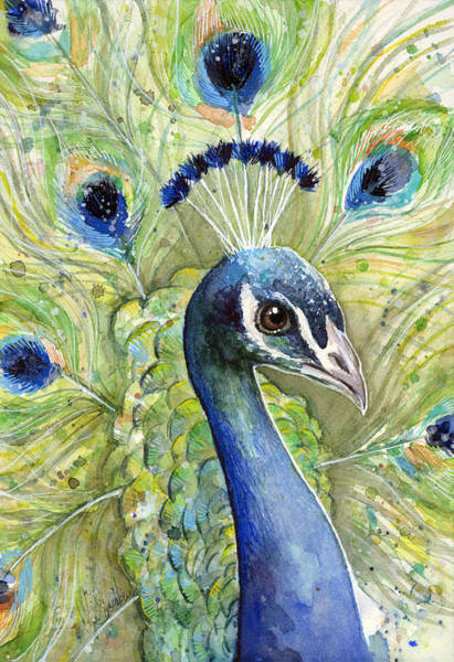 Colorful Animal Painting - Peacock Watercolor Portrait by Olga Shvartsur