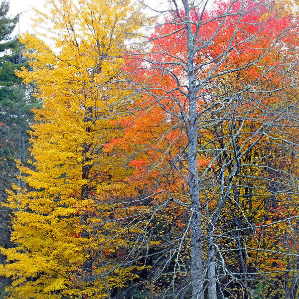 Photograph - Peak And Past Foliage by Duane McCullough