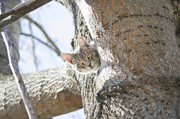 Photograph - Peaking Cat by Sharon Popek