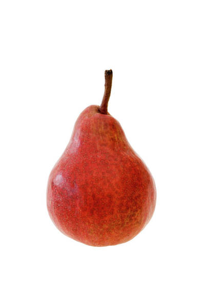 Horticulture Photograph - Pear 'red Williams' by Geoff Kidd/science Photo Library