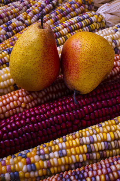 Indian Corn Photograph - Pears And Indian Corn by Garry Gay