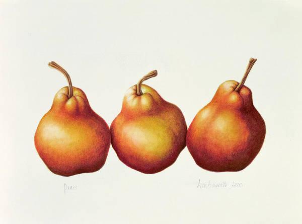 Veg Painting - Pears by Annabel Barrett