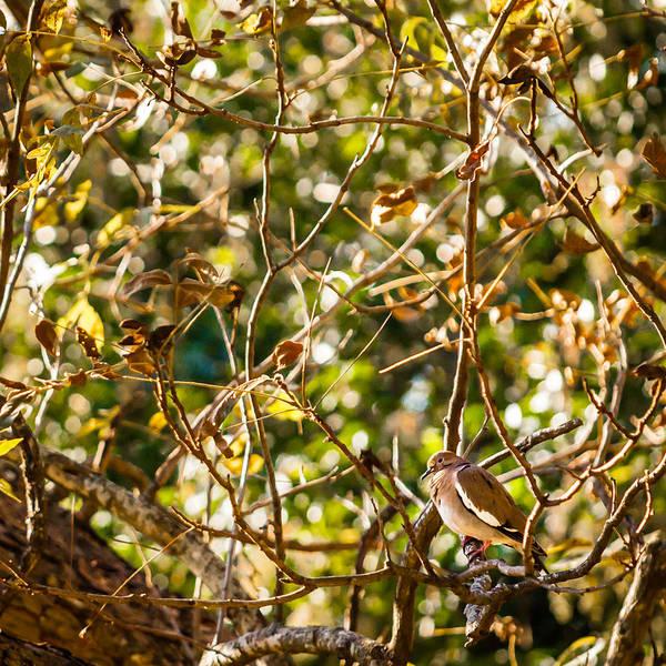 Photograph - Pecan Tree Sittin' by Melinda Ledsome