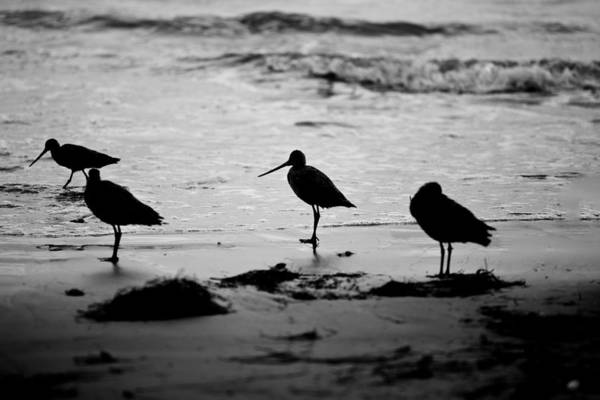 Photograph - Peckerheads by Peter Tellone