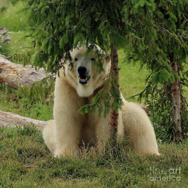 Photograph - Peek-a-boo Bear by Karen Adams