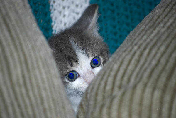 Wall Art - Photograph - Peek A Boo Kitty by Thomas Woolworth