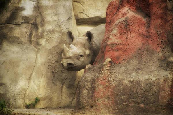 Rhinocerus Photograph - Peek A Boo Rhino by Thomas Woolworth