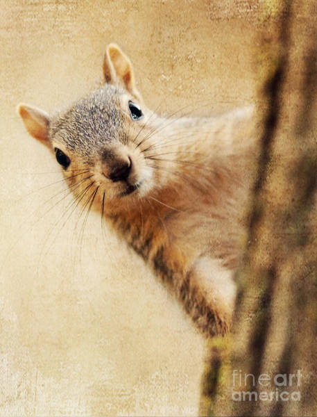 Photograph - Peek-a-boo Squirrel by Pam  Holdsworth