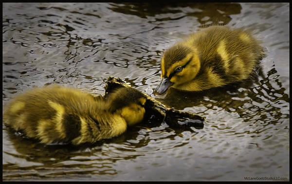 Duck Meat Photograph - Peeka Boo Ducklings by LeeAnn McLaneGoetz McLaneGoetzStudioLLCcom
