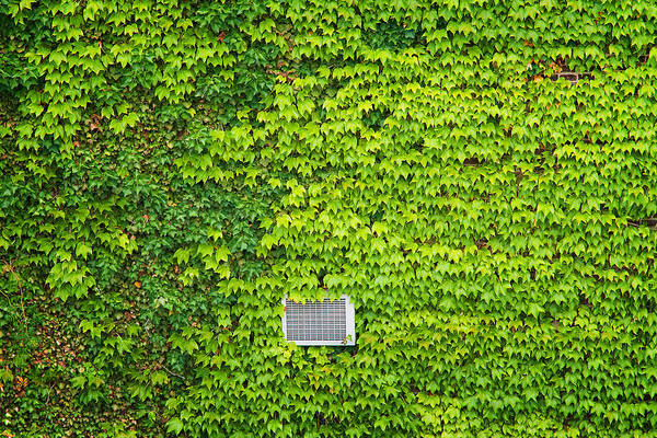 Photograph - Peeking Through Ivy On The High Line by Gary Slawsky
