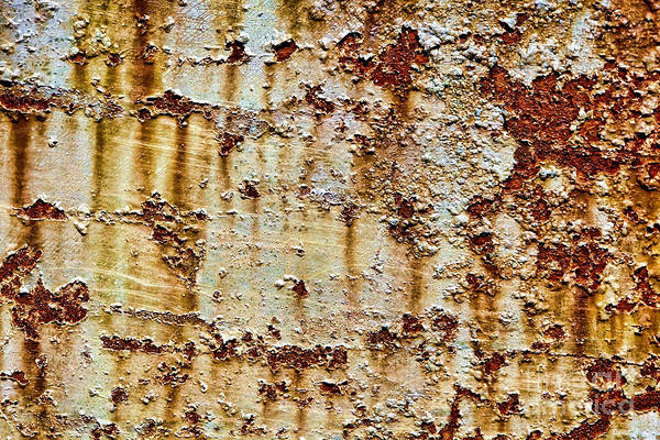 Photograph - Peeling  by Olivier Le Queinec