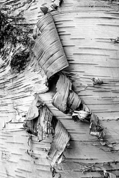 Photograph - Peeling by Robert Mitchell