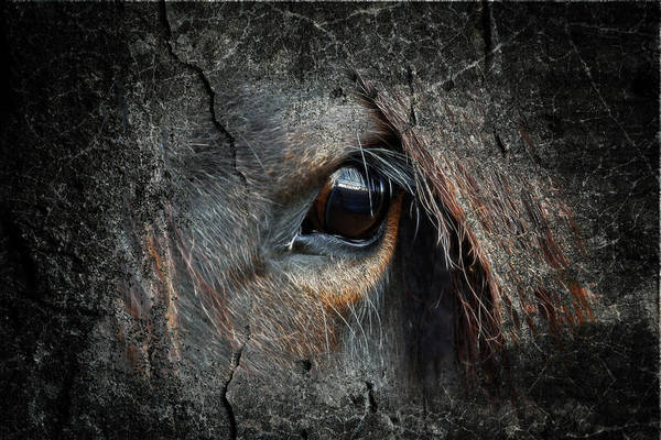 Wall Art - Photograph - Peering Out by Steve McKinzie