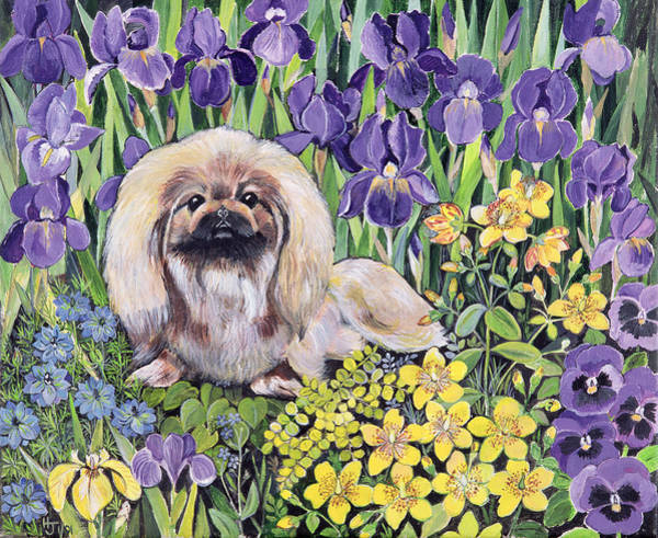 Wall Art - Photograph - Peke In The Flower Bed Acrylic On Canvas by Hilary Jones