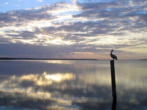 Photograph - Pelican At Sunset by Adam Johnson