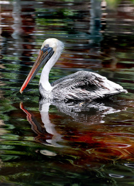 Photograph - Pelican Bay by Donna Proctor