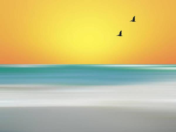 Photograph - Pelican Beach by Sean Allen