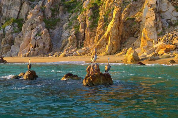 Baja Photograph - Pelican, Cabo San Lucas, Baja, Mexico by Douglas Peebles