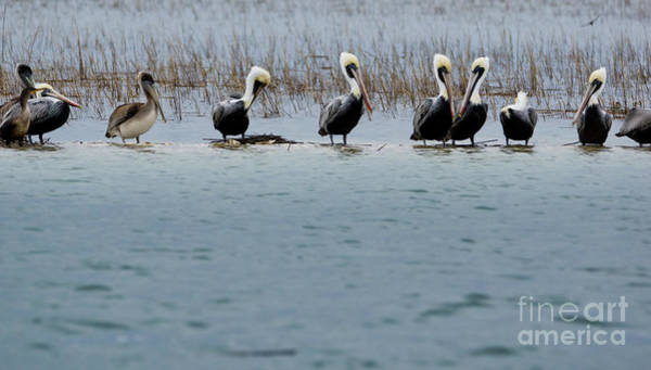 Wall Art - Photograph - Pelican Conversation by Matthew Trudeau