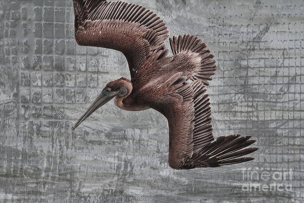 Photograph - Pelican Dive Mode by Deborah Benoit