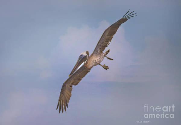 Photograph - Pelican Grace In Flight by Deborah Benoit