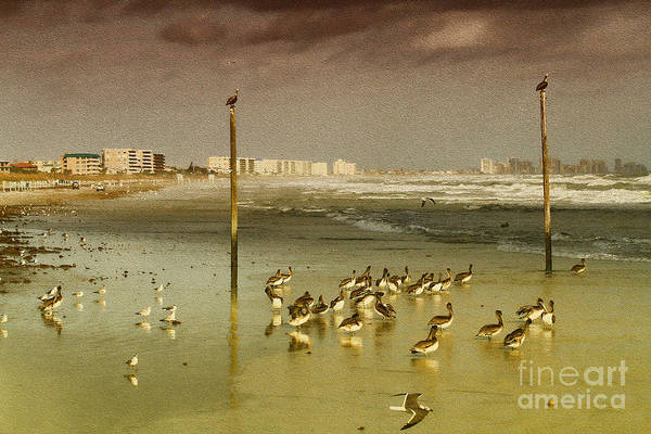 Photograph - Pelican Haven by Deborah Benoit